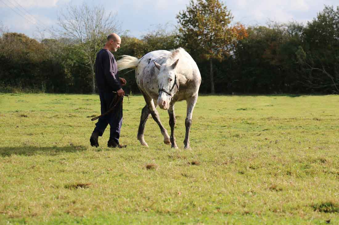 Discover the Perfect Horse - BALANCE