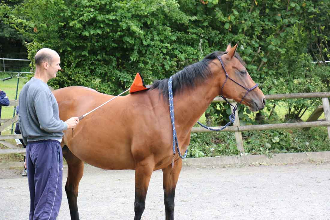 Discover the Perfect Horse - CONFIDENCE