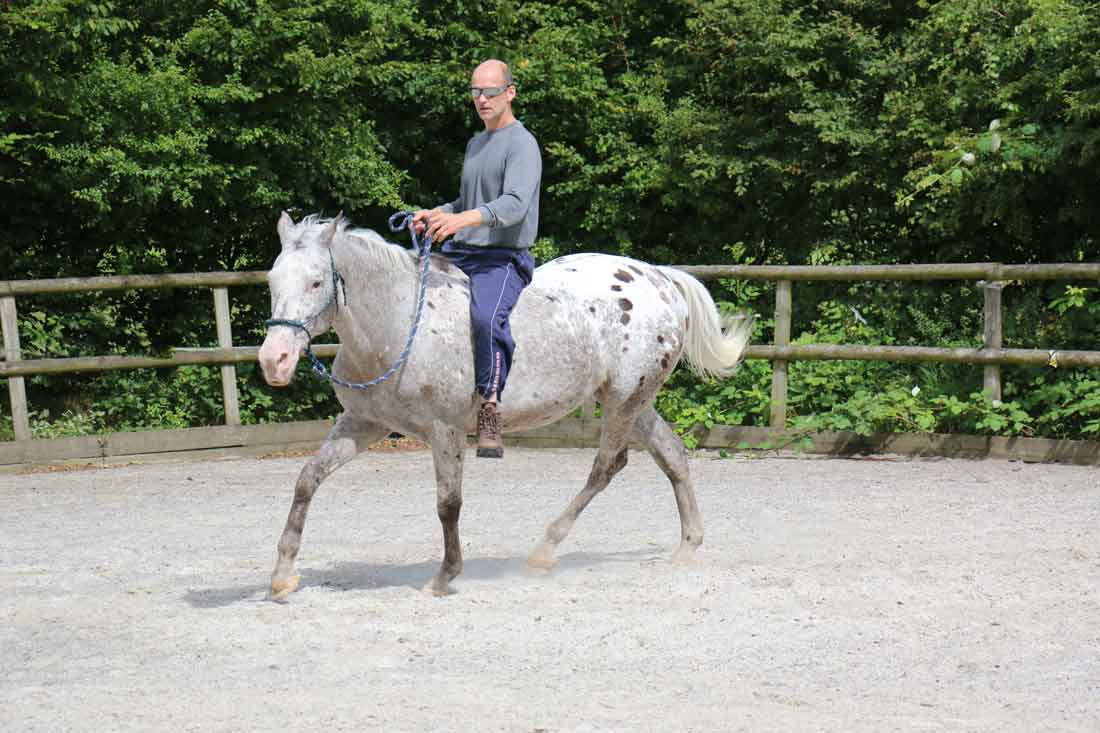 Discover the Perfect Horse - PERFORMANCE